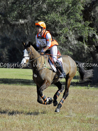 Rocking Horse II Feb 2014