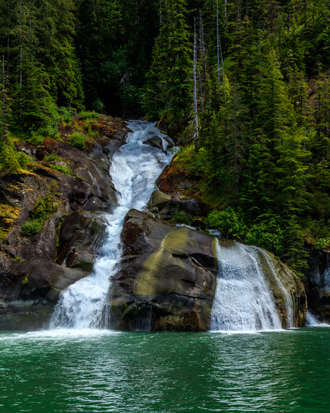Not everything at Tracy Arm is about glaciers and icebergs