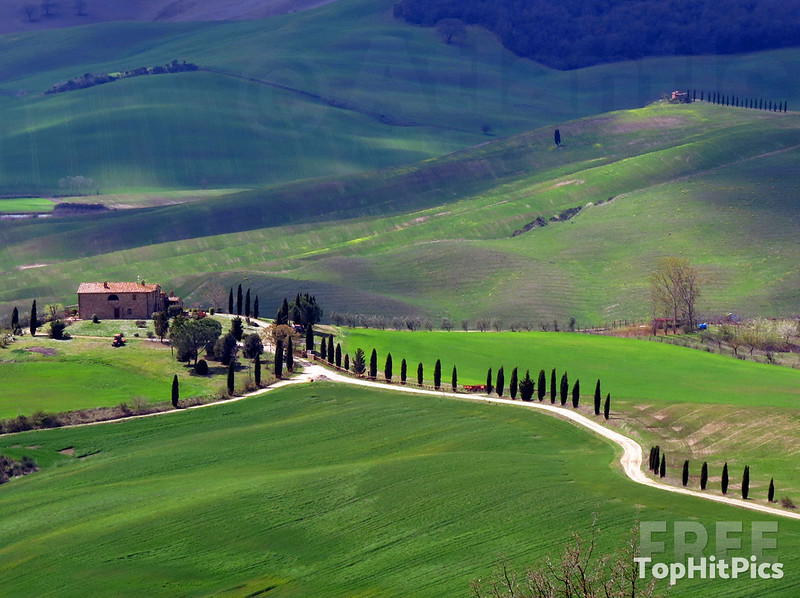 Cyprus Tress line the road in Tuscany, Italy
