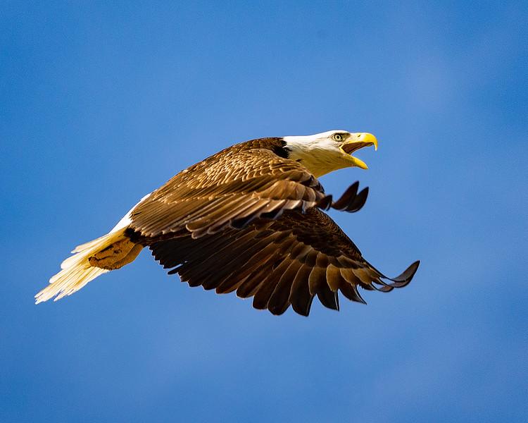 Eaglesavagebite-copy.jpg