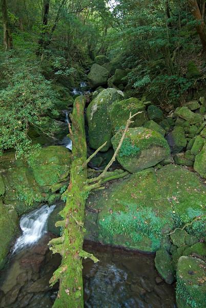 Piles of moss covered rocks in the creek at Shiratani Unsuikyo - Yakushima, Japan