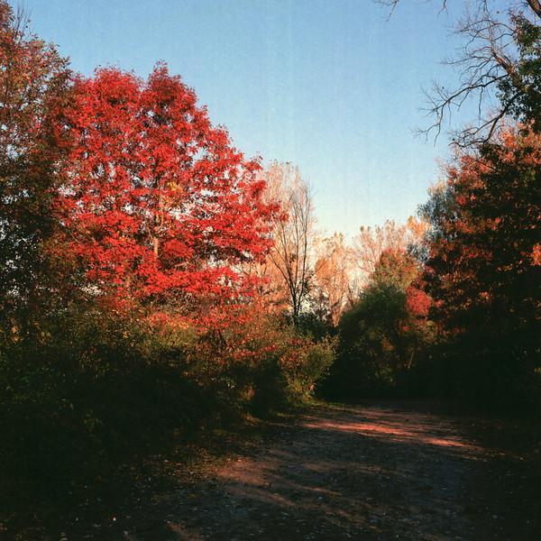 Autumn Hike 120 Film-00008.jpg
