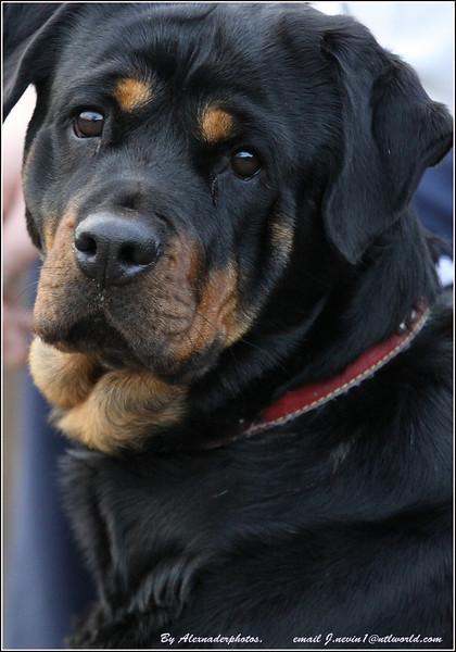 Balderton Dog