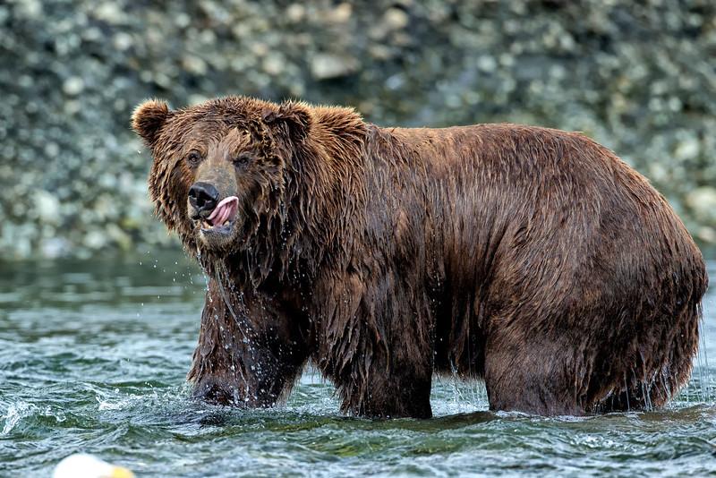 Alaska_2013_FH0T7379.jpg
