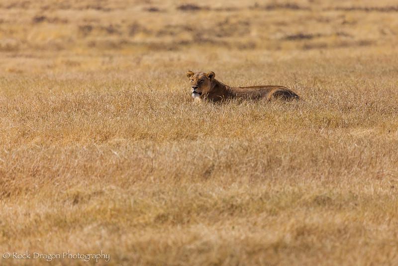 Ngorongoro-19.jpg