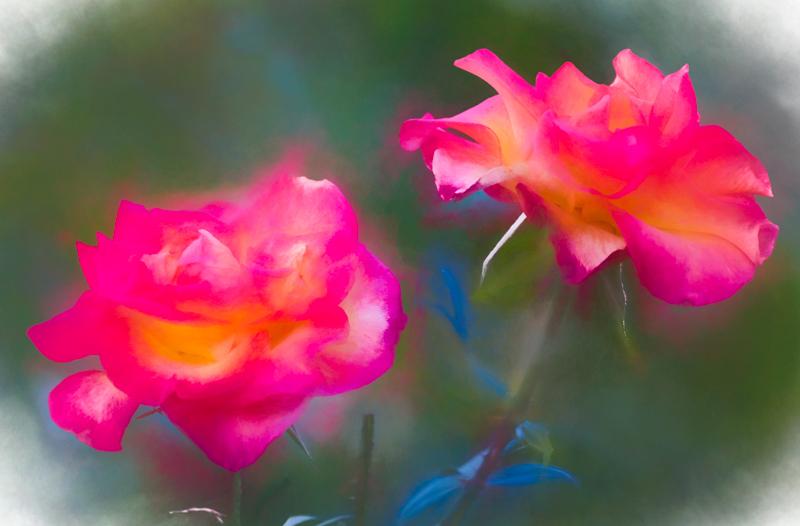 December 4 - Floral twins.jpg