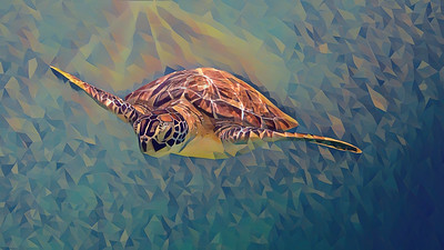 Funky Turtles and Beach Scenes