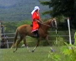 Lucy, 5 yo TB mare for sale, cross-trains at an SCA medieval equestrian practice