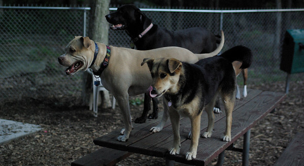PICS JUNE 17::Mojo, Lucy, Maddie ( the girls)