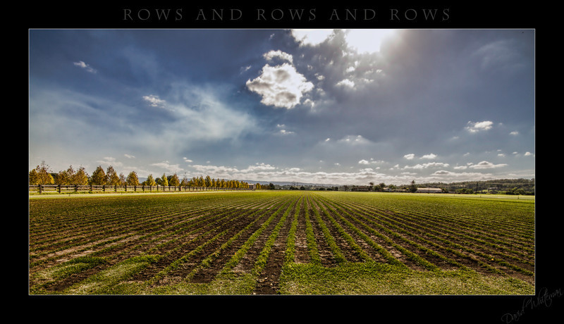Rows and rows and rows
