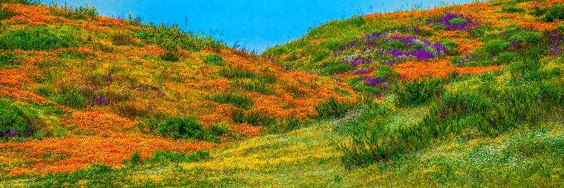 California Spring Wildflower Superbloom Symphony #1: Diamond Valley Lake Wildflower Trail Superbloom! California Poppy Wild Flower Super Bloom Fine Art Landscape Nature Photography!  Elliot McGucken Fine Art Prints & Luxury Wall Art