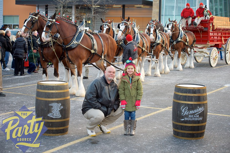 Clydesdale Portraits 308.jpg
