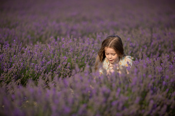 2020 - Lavender Evening 005