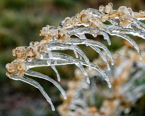 Ice Petal Flowers