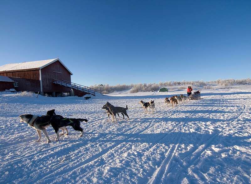 Nice shot of passing dog sled.