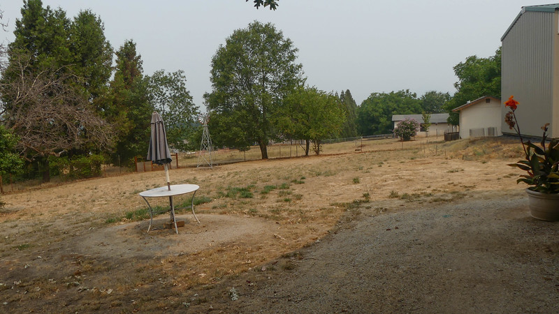 typical dry, hot, smoky, weedy, brown view in the dog days of August.  My least favorite time of year here in Grants Pass