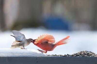 A Cardinal Life