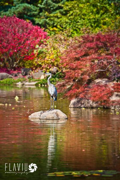 Anderson Japanese Garden - Rockford IL