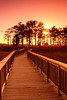 Boardwalk through the swamp at sunset. Newport News, VA. © 2007 Kenneth R. Sheide