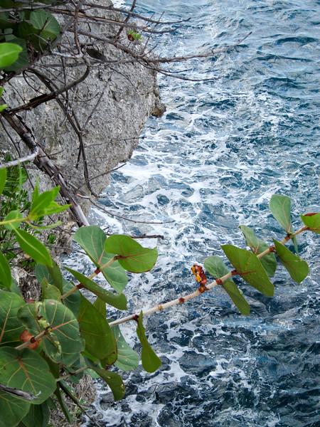 20120103-120835_BE7f_Canon PowerShot S95.jpg