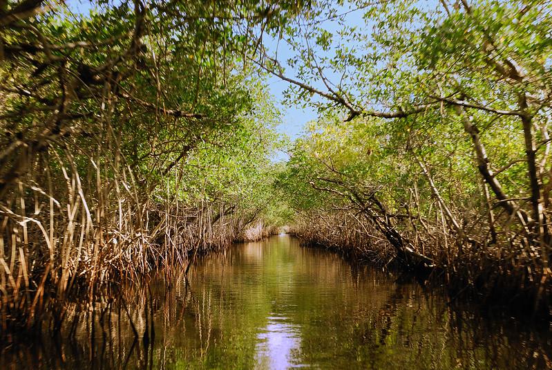 DSC_4280 Everglades 2009 RS.jpg