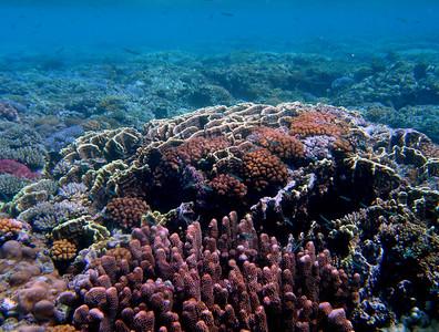 Reefscapes (Guam)