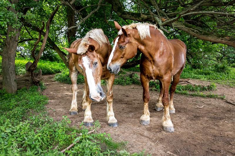 horses-.jpg