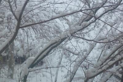 Winter '14-'15