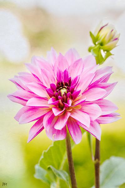 flower2_8020_6181.jpg