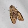 2017_ moth_Canopy Camp_Darien_Dec_IMG_9639