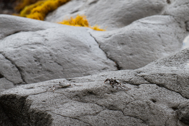 A few crabs chilling on the rocks