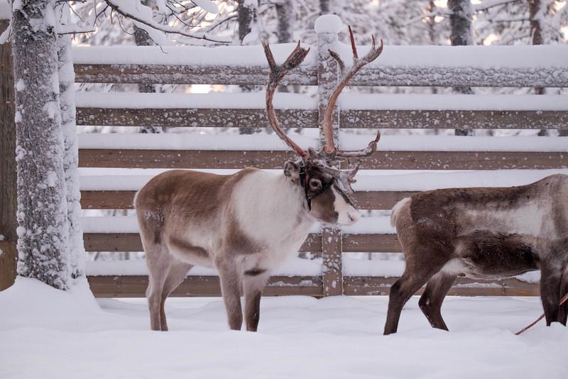 Finland_160117_84.jpg