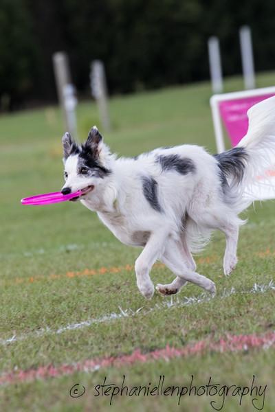 _MG_3027Up_dog_International_2016_StephaniellenPhotography.jpg