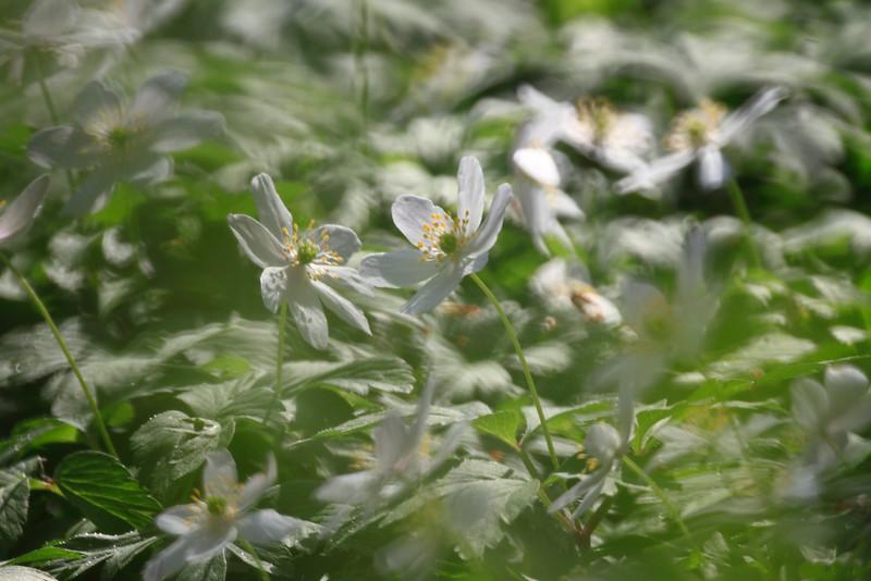Flora & Fauna — Növények és állatok