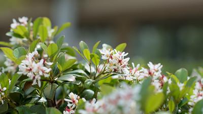 031918 Spring Has Sprung