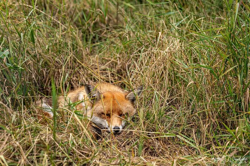 British Wildlife Centre_D850-9991.jpg