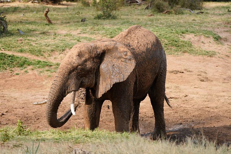 safari-2018-44.jpg
