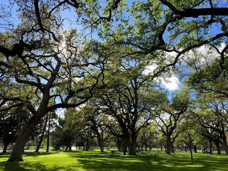 march trees.jpg