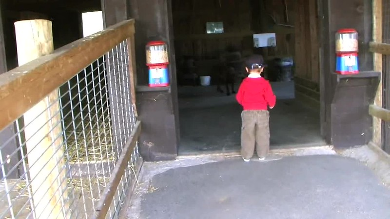 2009-05-06 Springridge Farm.wmv