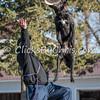 Disc dog fun - Saturday, March 28, 2015 - Frame: 3077