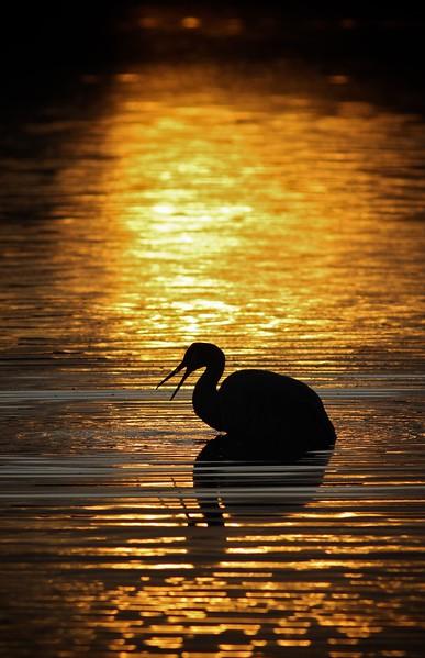 Sandhill Crane keyhole sunset_0007084.jpg