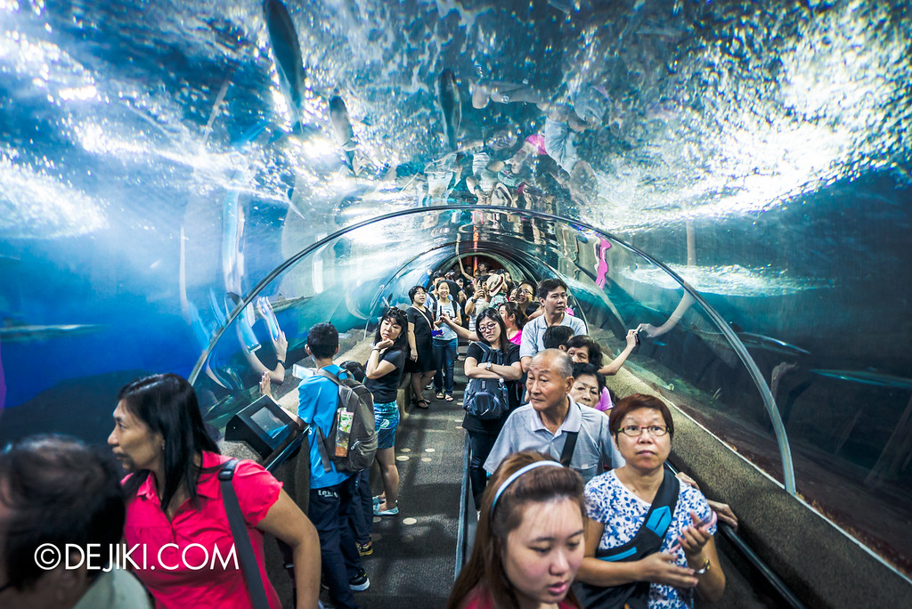 Underwater World Singapore - Crowded tunnel guests