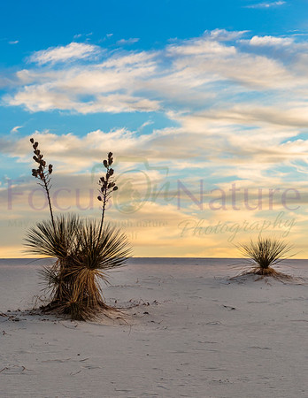 White Sands National Park Gallery