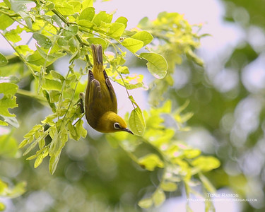 Sta. Elena Birds
