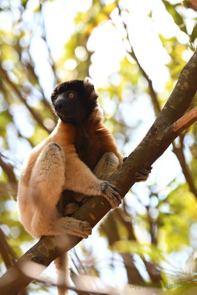 Madagascar 2017 (20)