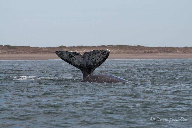 Mexico-Loreto-Whale-2285.jpg
