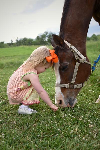 Silvas Horses