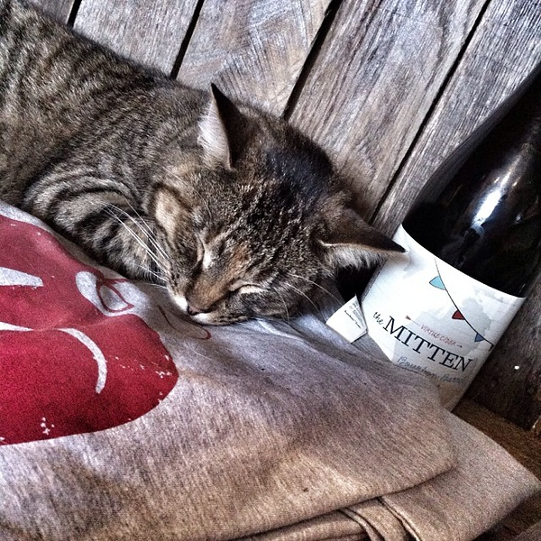Sleepy kitty cat watching over the cider.