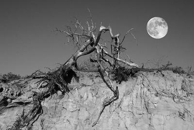 Dead Branch with Moon.jpg