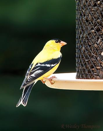 Bird Feeder Visitors